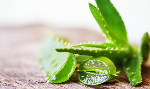 Celiachia e aloe: la parola al naturopata